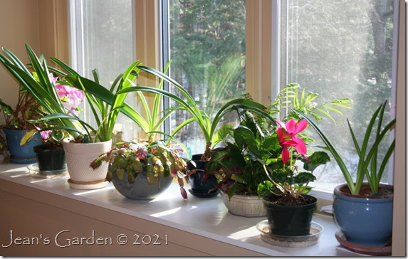 Plant window jan 2021