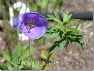brookside first flower 2021