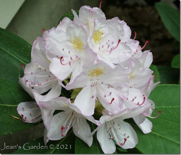 Don Ouellette Memorial Blossom