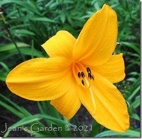 Orange Prelude last flower