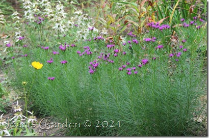 Iron butterfly with coreopsis