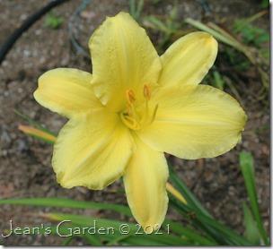 Sandra Elizabeth last bloom