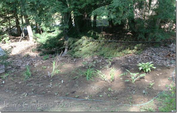 woodland border planted